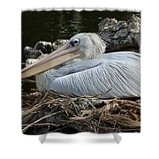 White Pelican 1 Shower Curtain