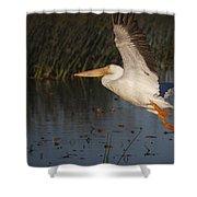 White Pelican 198 Shower Curtain