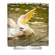 White Pelican Shower Curtain