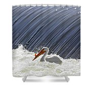 White Pelican Over The Dam Shower Curtain