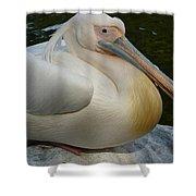 White Pelican Sitting Shower Curtain