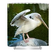 White Pelican Standing  Shower Curtain