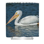 White Pelican Swimming Shower Curtain