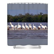 White Pelicans And Little Friends Shower Curtain