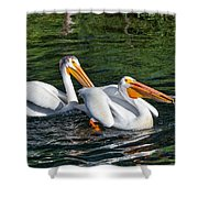 White Pelicans Fishing For Trout Shower Curtain by Kathleen Bishop