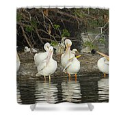 White Pelicans Grooming Shower Curtain