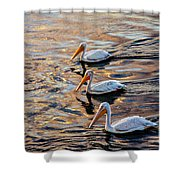 White Pelicans  In Golden Water Shower Curtain