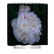 White Peony And Companion Abstract Flower Painting Shower Curtain