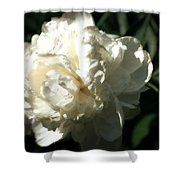 White Peony In Spring Shower Curtain