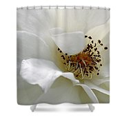 White Petals Shower Curtain