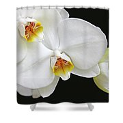 White Phalaenopsis Orchid Flowers Shower Curtain