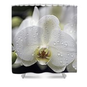 White Phalaenopsis With Water Drops 5797 Shower Curtain