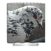 White Pigeon Shower Curtain