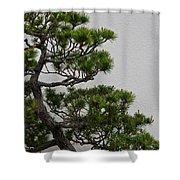 White Pine Bonsai Shower Curtain