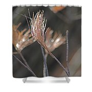 White Pine Branch Shower Curtain
