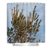 White Pine In Spring Shower Curtain