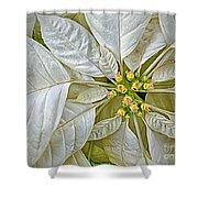 White Poinsettia Shower Curtain