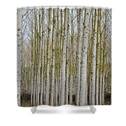 White Poles IIi Shower Curtain