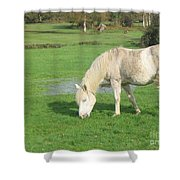 White Pony On The Moors Shower Curtain