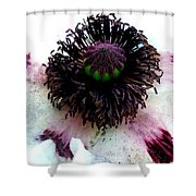 White Poppy Macro Shower Curtain
