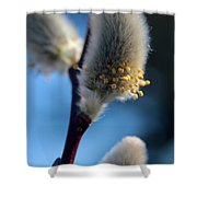 White Pussy Willow In Bloom Shower Curtain