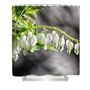 White Queen Shower Curtain