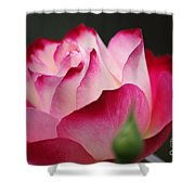 White Red Rose 01 Shower Curtain