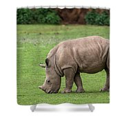 White Rhino 12 Shower Curtain