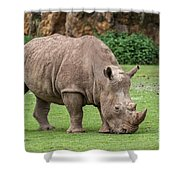 White Rhino 5 Shower Curtain