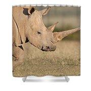 White Rhinoceros Kenya Shower Curtain