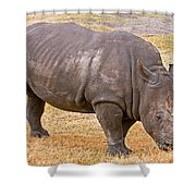 White Rhinoceros Shower Curtain