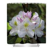 White Rhododendren Shower Curtain