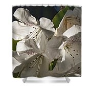 White Rhododendron B Shower Curtain