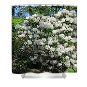 White Rhododendron Blooming In The Garden Shower Curtain