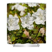 White Rhododendron Flowers In Bloom. Shower Curtain