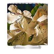 White Rhododendron Shower Curtain