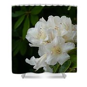 White Rhododendron With Tears Shower Curtain