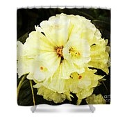 White Rhododendrons Shower Curtain
