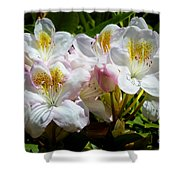White Rhododendron In Sunlight Shower Curtain