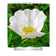 White Rose At Norris Point In Gros Morne National Park-newfoundland  Shower Curtain
