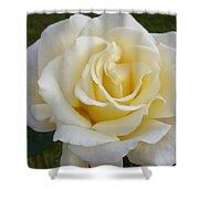 White Rose Named Ray Of Sun Shower Curtain