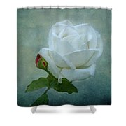 White Rose On Blue Shower Curtain