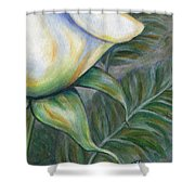 White Rose One Panel Four Of Four Shower Curtain