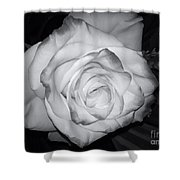 White Rose Passion Impression Shower Curtain