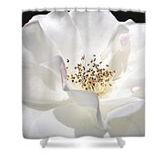 White Rose Petals Shower Curtain