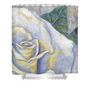 White Rose Two Panel Two Of Four Shower Curtain