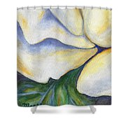 White Rose Two Panel Three Of Four Shower Curtain