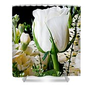 White Roses Close Up Shower Curtain