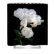 White Roses In The Moonlight Shower Curtain