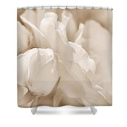 White Roses Soft Brown Shower Curtain